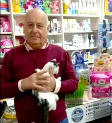 Gattina abbandonata cerca Amore